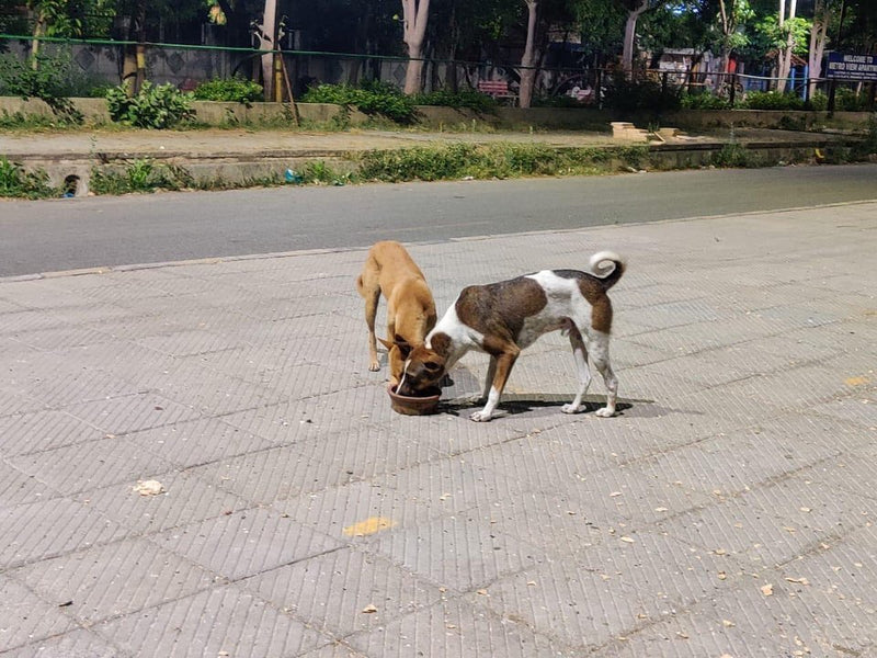 Tips to feed stray animals