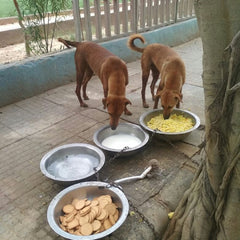 providing food and water to stray animals daily