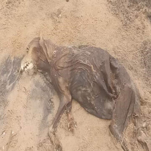 A stray dog dead due to hunger and pain after a natural disaster hits.