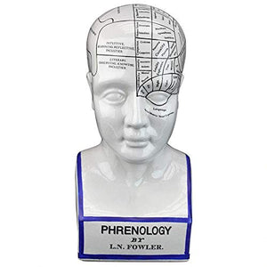 Design Toscano Porcelain Phrenology Head Fortune Telling Statue, 12 Inch, Porcelain, White