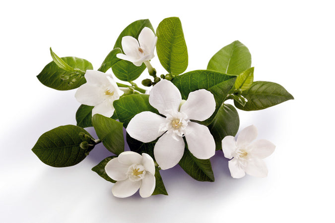 SOME THOUGHTS ON NEROLI