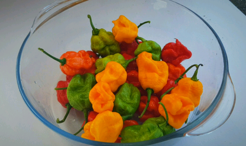 10 x Dragons Breath Chilli Pepper Seeds