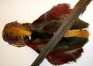 Golden Pheasant Complete Skin - killerloopflyfishing Fly Fishing Tackle Outfitter & Guiding Service