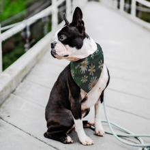 Load image into Gallery viewer, Daisies Pet Bandana