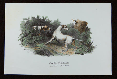 Reichert, Heinrich (1801-1893): Pointer Dogs. Superb large FOLIO