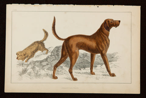 Goldsmith, Oliver (1728-1774); author: Two dogs - Terrier and Hound Dog