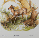 Reichert, Heinrich (1801-1893): DEER Fawn. Superb large FOLIO handcol.