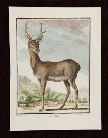 De Seve, Jaques (active 1742-1788), artist; Comte de Buffon (1707-1788), author: Le Cerf - the Stag; from Buffon's famous work