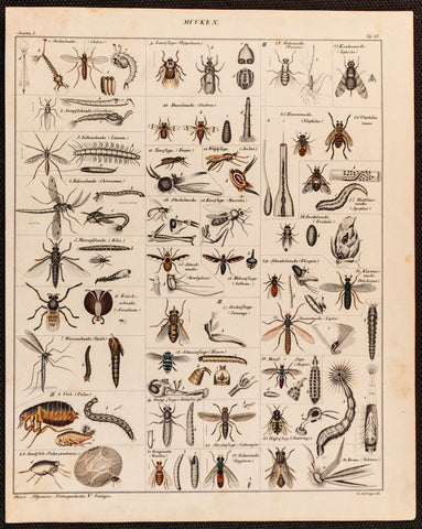 Oken, Lorenz (1779-1851): Mucken (various insects, flea, flies), plate 35.