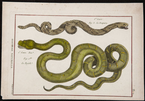 Bonnaterre, Pierre Joseph (1752-1804): Rattle Snakes - handcolored Engraving