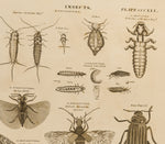 Campbell, R. (Dates unkown): Insects, various.