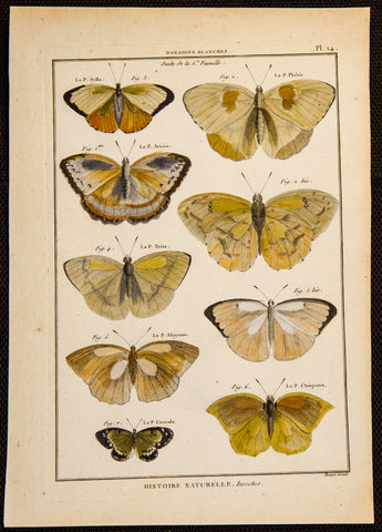 Latreille, Pierre André (1762-1833): Butterfiles, superb hand colored Folio