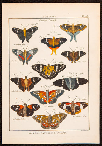 Latreille, Pierre André (1762-1833): Butterflies, superb hand coloured copper engraving FOLIO