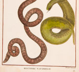 Bonnaterre, Pierre Joseph (1752-1804): SNAKES Herpetology handcolored Engraving