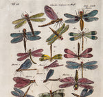Merian, Matthäus, the Elder (1593 - 1650): Dragon flies, flying insects, Water spiders - Merian & Jonston c.1660 Folio