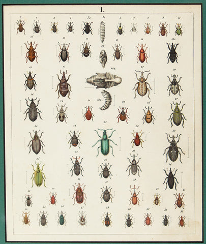 Berge, Carl Friedrich Wilhelm (1811-1883): Beetles, various insects. Plate no. 1
