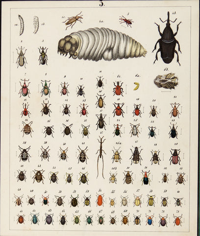 Berge, Carl Friedrich Wilhelm (1811-1883): Beetles, various insects. Plate no. 3