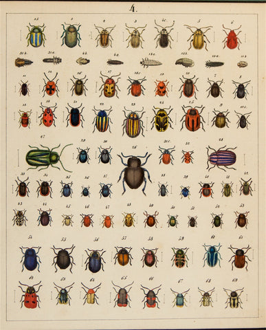 Berge, Carl Friedrich Wilhelm (1811-1883): Beetles, various insects. Plate no. 4