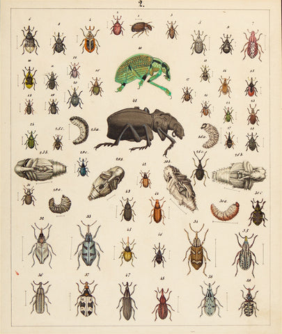 Berge, Carl Friedrich Wilhelm (1811-1883): Beetles, various insects. Plate no. 2