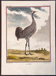 De Seve, Jaques (active 1742-1788), artist; Comte de Buffon (1707-1788), author: LARGE CRANE BIRD copper engraving