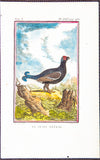 De Seve, Jaques (active 1742-1788), artist; Comte de Buffon (1707-1788), author: LITTLE GROUSE BIRD - from fine 8vo Edn