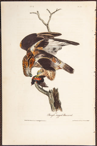 Audubon, John James (1785 - 1851): Rough-legged Buzzard. 11 - 1840 Birds of America First Edition