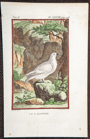 De Seve, Jaques (active 1742-1788); Comte de Buffon (1707-1788), author: LAGOPUS GROUSE