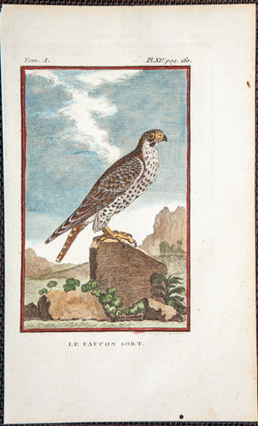 "De Seve, Jaques (active 1742-1788); Comte de Buffon (1707-1788), author: FALCON BIRD ""Le Faucon Sort"" - from fine 8vo Edn"