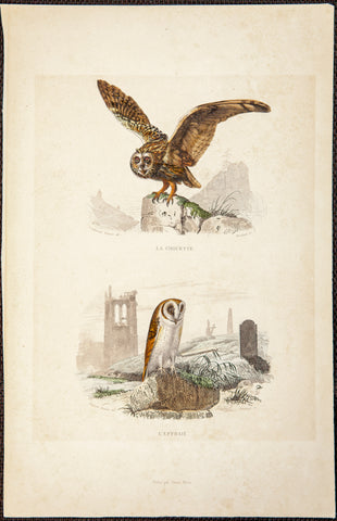 Travies, Edouard (1809-1876), artist; Comte de Buffon (1707-1788), author: Two owls; La Chouette & L'Effraire