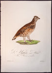 Susemihl, Johann Conrad (1767-1847): FEMALE HAZEL GROUSE