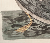 Paillou, Peter (c.1720-c.1790), artist; after George Edwards: Fulmar gull seabird - Pennant - LG Folio Hand Coloured Bird Print.