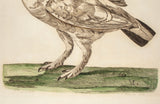 Pennant, Thomas (1726-1798), author; Paillou, Peter (c.1720-c.1790), artist: Ptarmigan