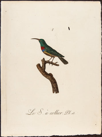 Audebert, Jean Baptiste (1759-1800): OISEAUX DORES FINE HAND COLOR FOLIO PURPLE INDIAN CREEPER R4B