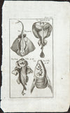 Brookes, Richard (1721-1763): Four Skate fishes: The Tropedo, The Ray, The Frog Fish, The Sun Fish; Plate 32
