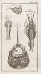 Brookes, Richard (1721-1763): The River Crab; Sea Lobster; The Soldier Crab, the Violet Crab. Plate 36