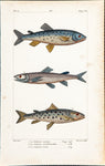 Prêtre, Jean-Gabriel (1768-1849), artist: Three Salmon fishes, Tome 4; Page 558