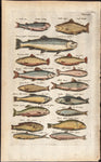 Merian, Matthäus, the Elder (1593 - 1650): Salmon, Trout, Herring; 17 fishes; Tab XXX