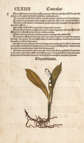 Brunfels, Otto (1488-1534): LILLY OF THE VALLEY - 1543 MEYENBLUEMLIN
