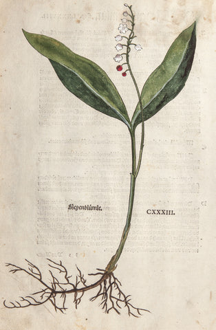Fuchs, Leonart (1501-1566): 1543 LILY-OF-THE-VALLEY  orig FOLIO Large handcol WOODCUT