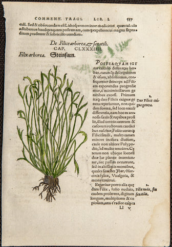 Kandel, David (1526-1553); Bock, Hieronymus (1498-1554): 1552  - FERNS - 2 original handcolored WOODCUTS
