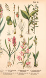 Schubert, Gotthilf Heinrich von (1780-1860): Orchids, 24 in all