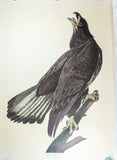 Audubon, John James (1785 - 1851): White Headed Eagle, plate 126 - Audubon Bird of America Folio, Amsterdam Edition