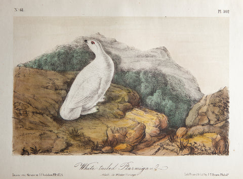 Audubon, John James (1785 - 1851): WHITE-TAILED PTARMIGAN, plate 302 - Rare Original Lockwood Ed 1865