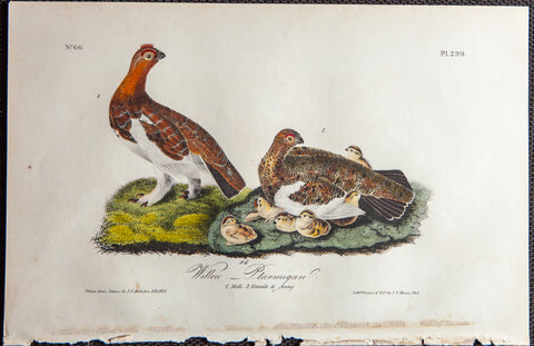 Audubon, John James (1785-1851): Rare Audubon Birds Of America Print 1st Ed 1840: WILLOW PTARMIGAN 299