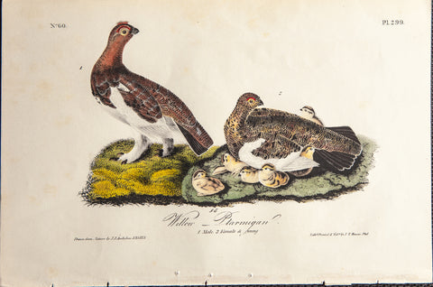 Audubon, John James (1785-1851): WILLOW PTARMIGAN, Plate 299 - Audubon Birds Of America Print 1st Ed