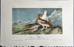 Audubon, John James (1785-1851): Rock Ptarmigan, plate 301