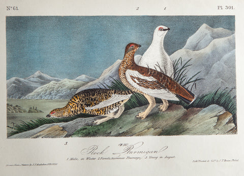 Audubon, John James (1785 - 1851): Rock Ptarmigan. 301 - 1840 Birds of America First Edition Lithograph