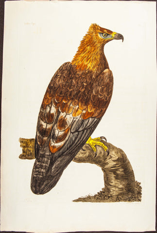Pennant, Thomas (1726-1798), author; Paillou, Peter (c.1720-c.1790), artist: Golden Eagle