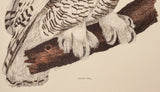 Modern reproduction of Snowy Owl by Selby