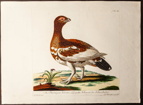 Edwards, George (1694 - 1773), artist; Pennant, Thomas (1726-1798), author: The Ptarmigan (German Edition)